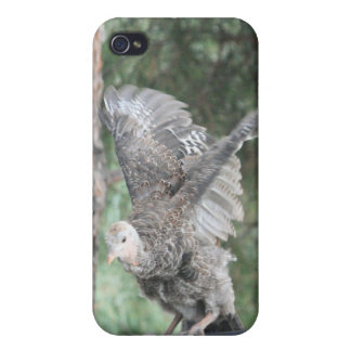 Young Wild Turkey Takeoff 4/4s iPhone 4 Cover