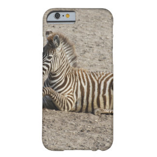 Young zebra 1215A Barely There iPhone 6 Case