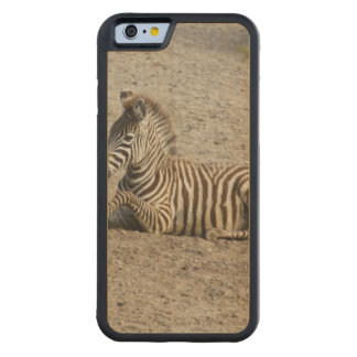 Young zebra 1215A Carved Maple iPhone 6 Bumper Case