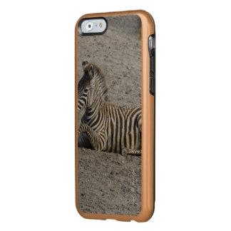 Young zebra 1215A Incipio Feather Shine iPhone 6 Case