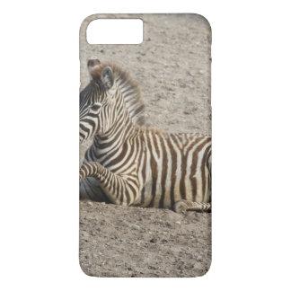 Young zebra 1215A iPhone 7 Plus Case