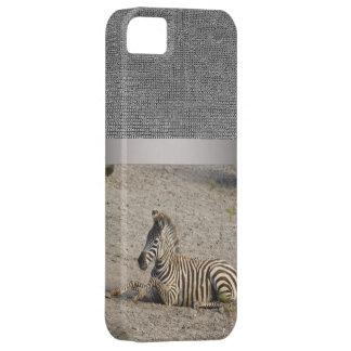 Young zebra 1215A iPhone SE/5/5s Case