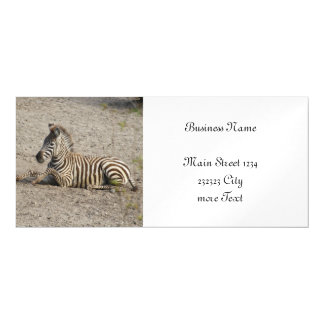Young zebra 1215A Magnetic Card