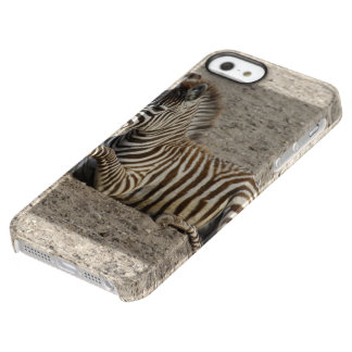 Young zebra 1215A Permafrost iPhone SE/5/5s Case