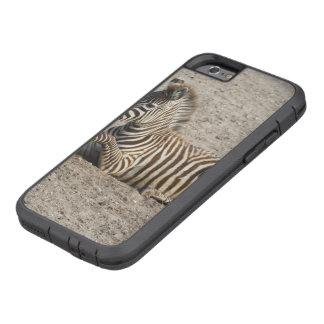 Young zebra 1215A Tough Xtreme iPhone 6 Case