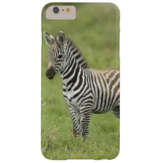 Young Zebra In The Serengeti Plain Barely There iPhone 6 Plus Case