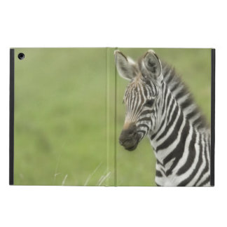 Young Zebra In The Serengeti Plain Case For iPad Air