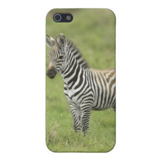 Young Zebra In The Serengeti Plain Cover For iPhone SE/5/5s