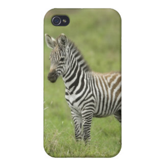 Young Zebra In The Serengeti Plain Covers For iPhone 4