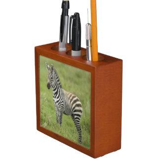 Young Zebra In The Serengeti Plain Pencil/Pen Holder