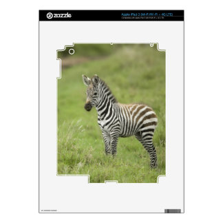 Young Zebra In The Serengeti Plain iPad 3 Decals