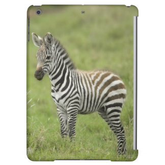 Young Zebra In The Serengeti Plain iPad Air Cover