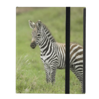 Young Zebra In The Serengeti Plain iPad Cover