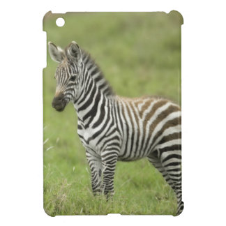 Young Zebra In The Serengeti Plain iPad Mini Case