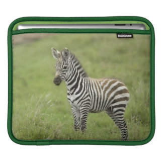 Young Zebra In The Serengeti Plain Sleeve For iPads