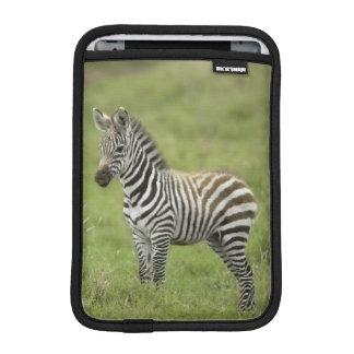 Young Zebra In The Serengeti Plain Sleeve For iPad Mini
