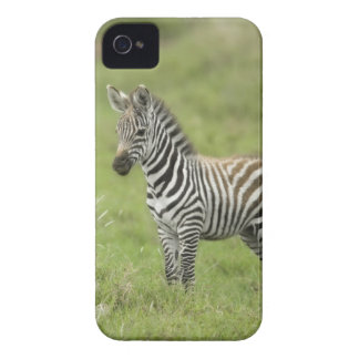 Young Zebra In The Serengeti Plain iPhone 4 Cover