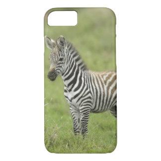 Young Zebra In The Serengeti Plain iPhone 7 Case