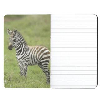 Young Zebra In The Serengeti Plain Journals