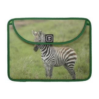 Young Zebra In The Serengeti Plain Sleeve For MacBook Pro