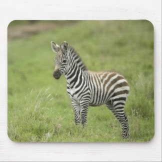 Young Zebra In The Serengeti Plain Mouse Pads