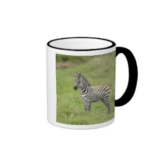 Young Zebra In The Serengeti Plain Coffee Mugs