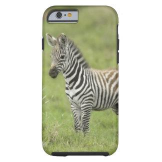 Young Zebra In The Serengeti Plain Tough iPhone 6 Case