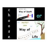 Your Choice Postcard