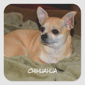 Your Custom Square Stickers Chihuahua dog