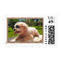 YOUR DOG Postage Stamps or Keep Cute Billie