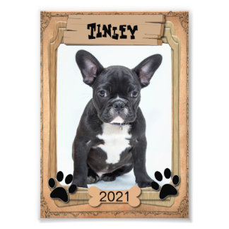 Your Family Pet - Decorative Photo Template