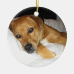Your favorite pet photo here1 ornaments