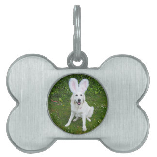 Your favorite pet photo on a dog tag pet ID tags