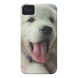 your favorite pet photo on an iphone4 case iPhone 4 Case-Mate case