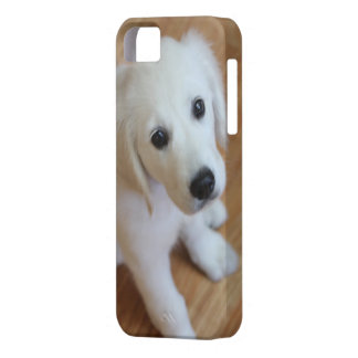 your favorite pet photo on an iphone4 case iPhone 5 covers