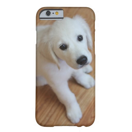 your favorite pet photo on an iPhone 6 case