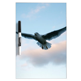 Your Free Just LIke Jonathan Livingston Dry-Erase Board