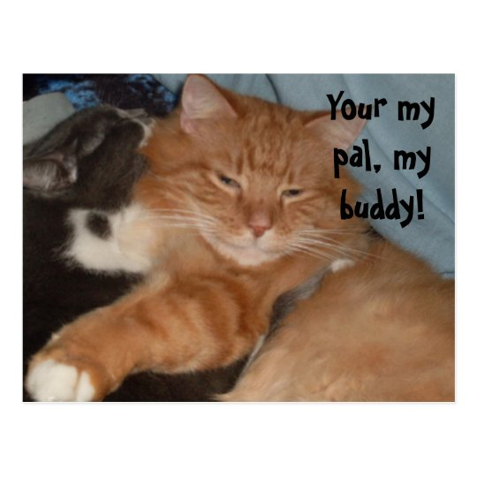 YOUR MY PAL,KITTY postcard