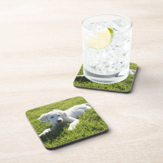 Your pet on a cork coaster