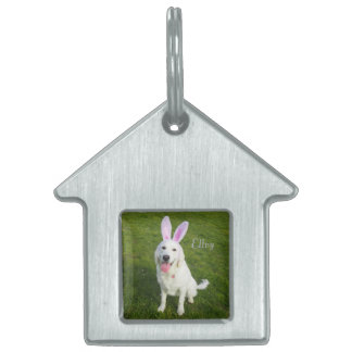 Your pet on a pet tag
