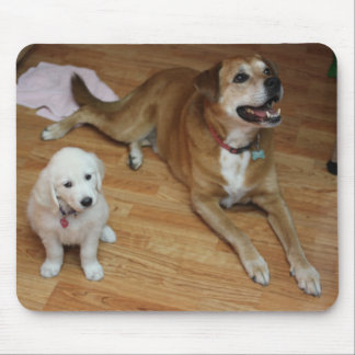 Your pets on a mouse-pad mouse pad