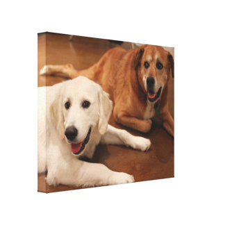 Your pets on a wrapped picture gallery wrapped canvas
