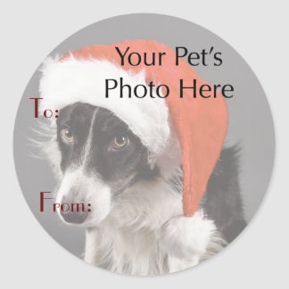 Your Pet's Photo on Christmas Name Tags Sticker