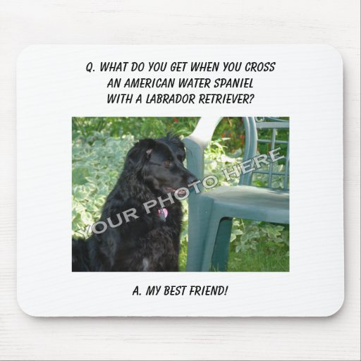 Your Photo! Best Friend American Water Spaniel Mix Mouse Pad
