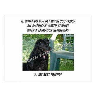 Your Photo! Best Friend American Water Spaniel Mix Postcard