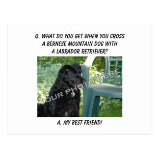 Your Photo! Best Friend Bernese Mountain Dog Mix Postcard