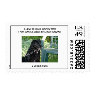 Your Photo! Best Friend Flat-Coated Retriever Mix Postage Stamps