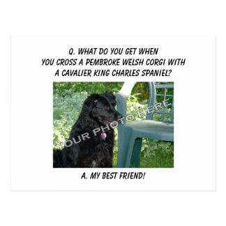 Your Photo! Best Friend Pembroke Welsh Corgi Mix Postcard