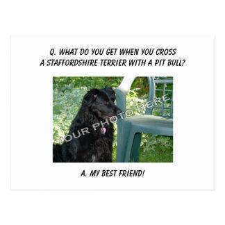 Your Photo! Best Friend Staffordshire Terrier Mix Postcard