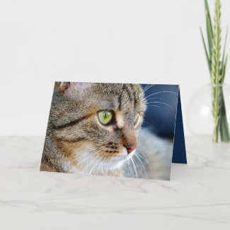 Your Photo Cat Condolences Sympathy Greeting Card